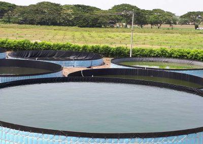 Sistemas Acuicolas - Proyectos - Empresa remolino Chicoral Tolima